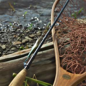 【釣行速報#05】如来様の水辺に棲む子ども達