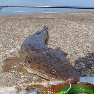 強雨の名取川河口域に思う【旬の魚を求めて様子見を…からの】
