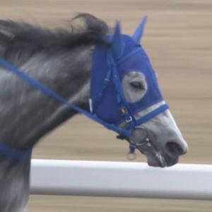 【競馬/東海S】フジの4角カメラワークwwwww まさかのテイエムジンソクの顔アップwww