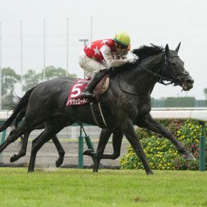 【神戸新聞杯】ダービー馬敗れる!ステラヴェローチェが快勝 重賞2勝目