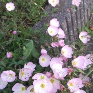 花のような笑顔