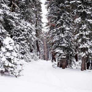 雪山のテント泊でフライシートを使ってはいけない!