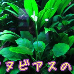 271【水中花】