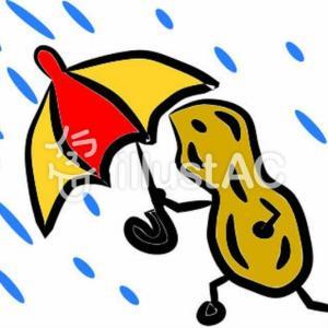 「雨ニモマケズ」と「井上陽水」