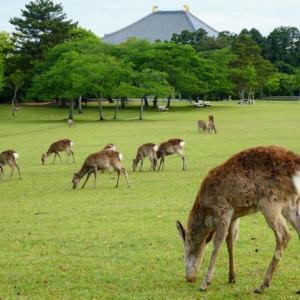 コロナは鹿もかかるの?~奈良ならではの素朴な疑問から動物から人への感染についてのまとめ~