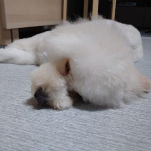 ~愛犬の暑さ対策・室内での対策について~
