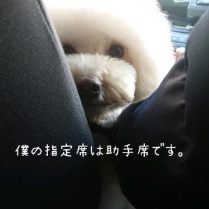 ~愛犬を守るドライブボックス(ベッド)について~