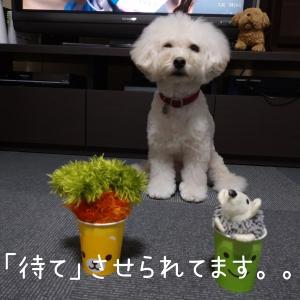 ~愛犬の手作りおもちゃ~