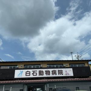 ミニーちゃんの闘病記〜其の十三〜