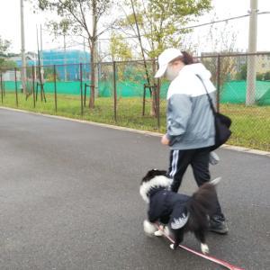お散歩途中のオビ練習