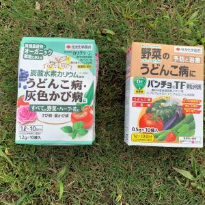 農薬の使い方 (予防薬と治療薬について)