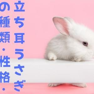 【立ち耳ウサギの特徴と性格】ネザーランドドワーフなどの6品種を解説!