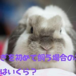 【大切】初めてウサギを飼う時の初期費用は約7万円は必要!?