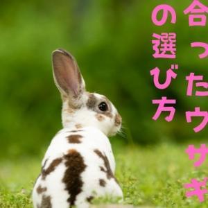 【ウサギの特徴・性格】を理解して自分に合うウサギを飼いましょう!