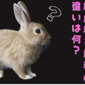 【ミニウサギという品種はない】ウサギさんの純血種と雑種の違いは何?