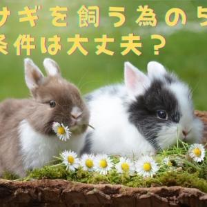 【本当にウサギを飼える?】ウサギを飼っても大丈夫な5つの最低条件!
