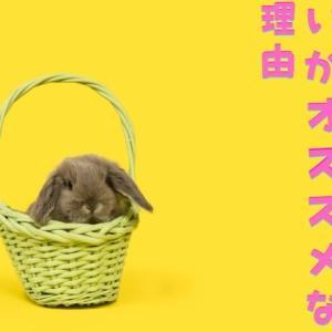 【ウサギと猫などの相性は?】ウサギは一羽飼いがおススメな理由を解説!