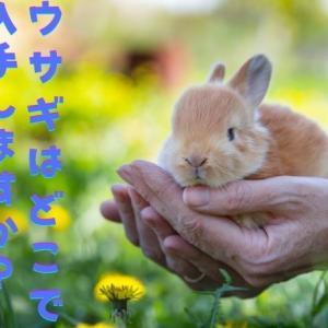 【確認】ウサギをペットショップなどで入手する場合に気をつけること