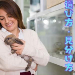 【健康で元気なウサギの選び方】安心してお迎えできる見分け方を解説!!