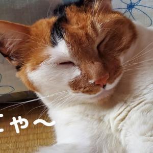 【143】れいにゃん堂のれいちゃん・夏バテにゃ&商品紹介😸