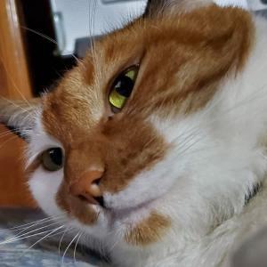 【194】れいにゃん堂のれいちゃん・やっぱり入らないにゃ&猫グッズ紹介😸