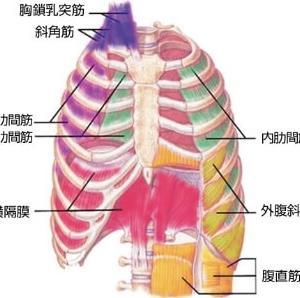 呼吸と動作