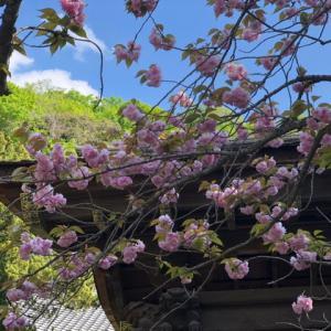 春の白日夢