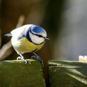 新発見❗️小鳥たちはヒトのように会話が出来る