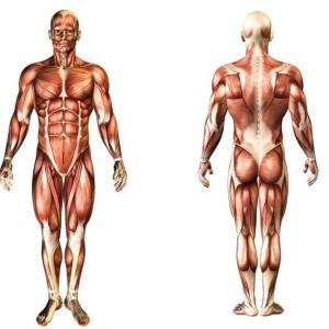 呼吸筋の柔軟強化=インナーマッスルの柔軟強化 健康呼吸