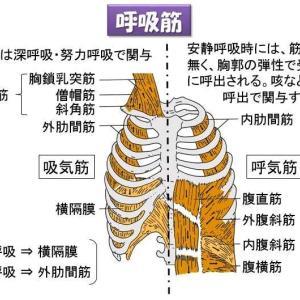 簡単!呼吸の方法で血圧が変わる! 自律血圧調整!