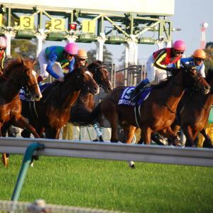 神戸新聞杯 スクリーニング ~データから消し馬を探す~