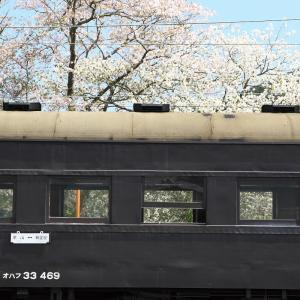 桜と旧型客車がよく似合う??