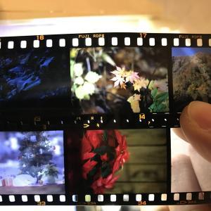 OLYMPUS.OM-1を使ってカラーリバーサルフィルムで撮影する