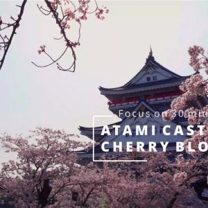 【作業用4K映像】熱海城と桜【高画質】