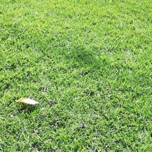 今月のTM9の芝刈り結果