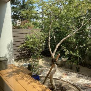 <お庭作り③>人工木ボーダーフェンスを建ててみた!