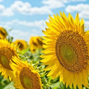 【日焼け対策】最近の夏日が暑すぎる