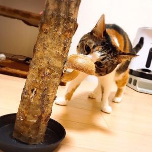 【なるきのこDX】もうすぐ秋だし自宅でシイタケを栽培してみないか?