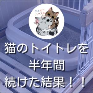 猫のトイトレを半年間続けた結果!!