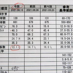 犬 糖尿病 インスリン43日目 診察日 トリミング