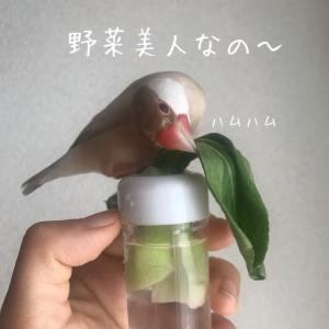 シナモン文鳥さん 葉っぱタイム