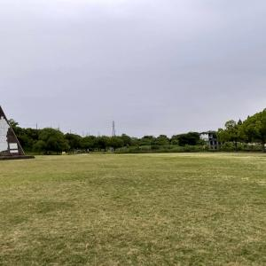 打上川治水緑地に咲いていた彼岸花。でも見れるのはあと少しかも 【寝屋フォト】