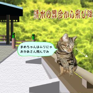 猫旅・清水寺