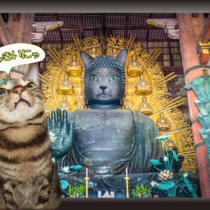 ねこ旅・奈良の大仏?