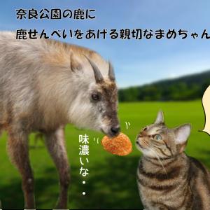 ねこ旅・奈良公園