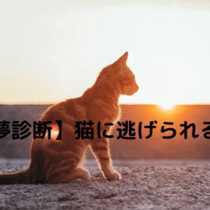 【夢診断】猫に逃げられる夢の意味!飼っている人だけとは限らない!