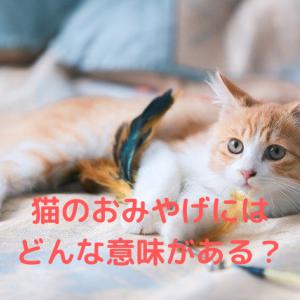 猫のおみやげにはどんな意味がある?褒めて欲しい!自慢したい?