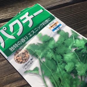 パクチーを栽培!プランターで家庭菜園をやってみよう