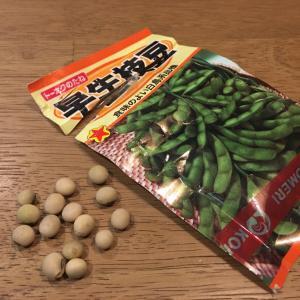 エダマメの種を蒔いて畑で栽培する方法を公開