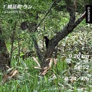 トレ日記(6/15):朝ラン9km